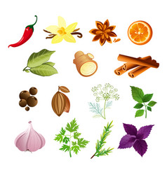 set of herbs and spices in vector image