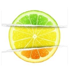 Triple citrus fruit vector