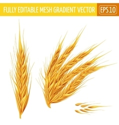 Ears of wheat on white background vector