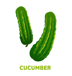 cucumber flat vector image vector image