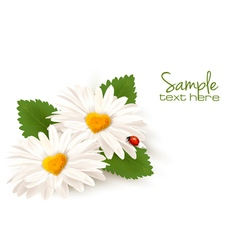 Valentines day background two daisies with hearts vector