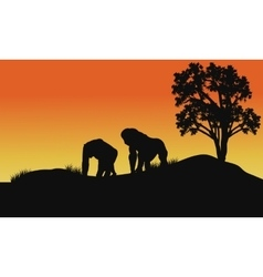 Silhouette of gorilla in fields vector