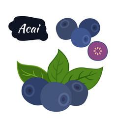 Super food acai berry exotic amazon nutrition vector