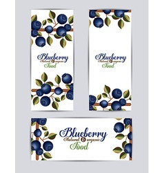 Blueberry design vector