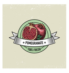 pomegranate vintage hand drawn fresh fruits vector image