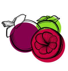 With asian mangosteen fruit vector