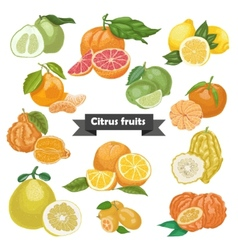 Set of isolated citrus fruits vector