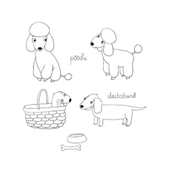 Set of cute dachshund and poodle in vector