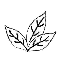 Tea leaf plant vector