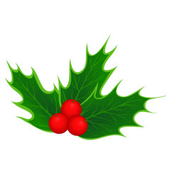 traditional Christmas holly leaves and berries vector image