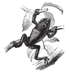 Tree frog vintage vector
