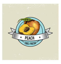 peach vintage hand drawn fresh fruits background vector image