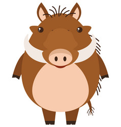 Warthog on white background vector