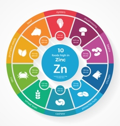 10 foods high in zinc vector