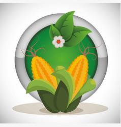 Corn cob grain fresh label vector