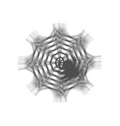 Spider on web gray icon vector