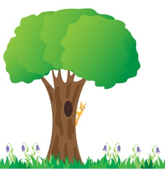 squirrel on a tree vector image