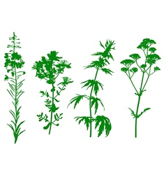 herbal green vector image