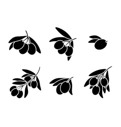 Olives on branch silhouettes set vector