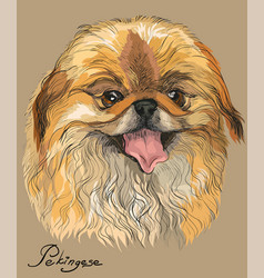 colored portrait of pekingese dog vector image vector image