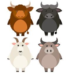 Farm animals on white background vector