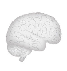 Grey human brain vector