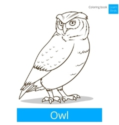 Owl bird learn birds coloring book vector