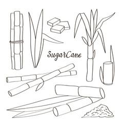 Sugar cane icons vector