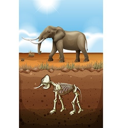 Elephant on the ground and fossil underground vector