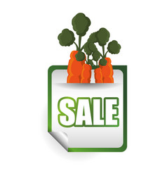 carrot sale vegetable food vector image