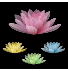 Lotus flowers isolated on a black background vector image