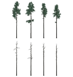 Pinetrees set in flat colors vector