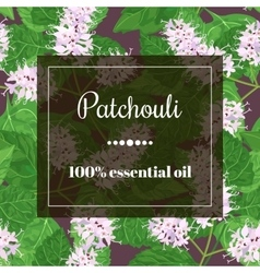 Patchouli essential oil vector