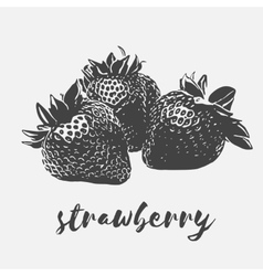 Strawberry organic vegan vector