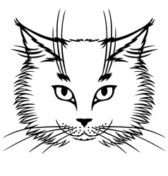 Cat white vector