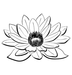 Black and white lotus flower vector