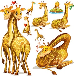 Giraffes in different positions vector