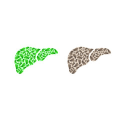 Liver silhouette with leaves vector