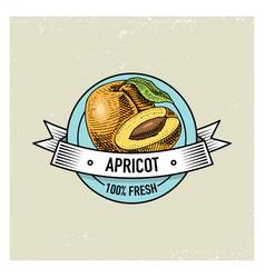 apricot vintage hand drawn fresh fruits vector image vector image