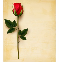 Happy Valentines Day background Single red rose on vector image vector image