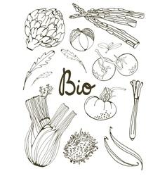 Outline set of fresh hand drawn vegetables vector image vector image