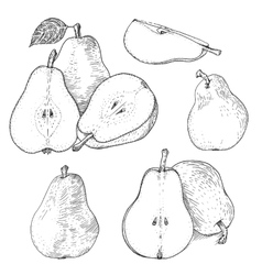 Ink pears sketches set vector