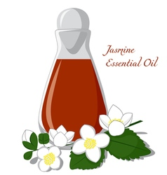 Jasmine essential oil vector image