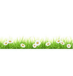 grass and chamomile vector image vector image