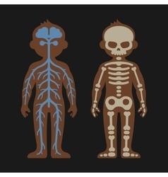 Human body anatomy set skeletonand nervous vector