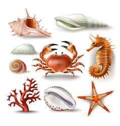Set of seashells coral crab vector
