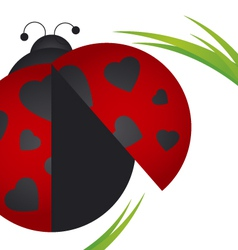 Ladybug on white background vector image vector image
