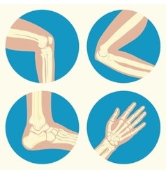 Set of human joints vector image vector image