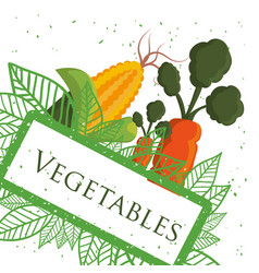 Vegetables fresh healthy nutrition poster vector