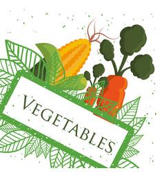 Vegetables fresh healthy nutrition poster vector